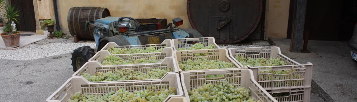 Tastevin – Wine blog